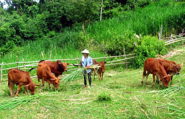 cách làm giàu ở nông thôn 3